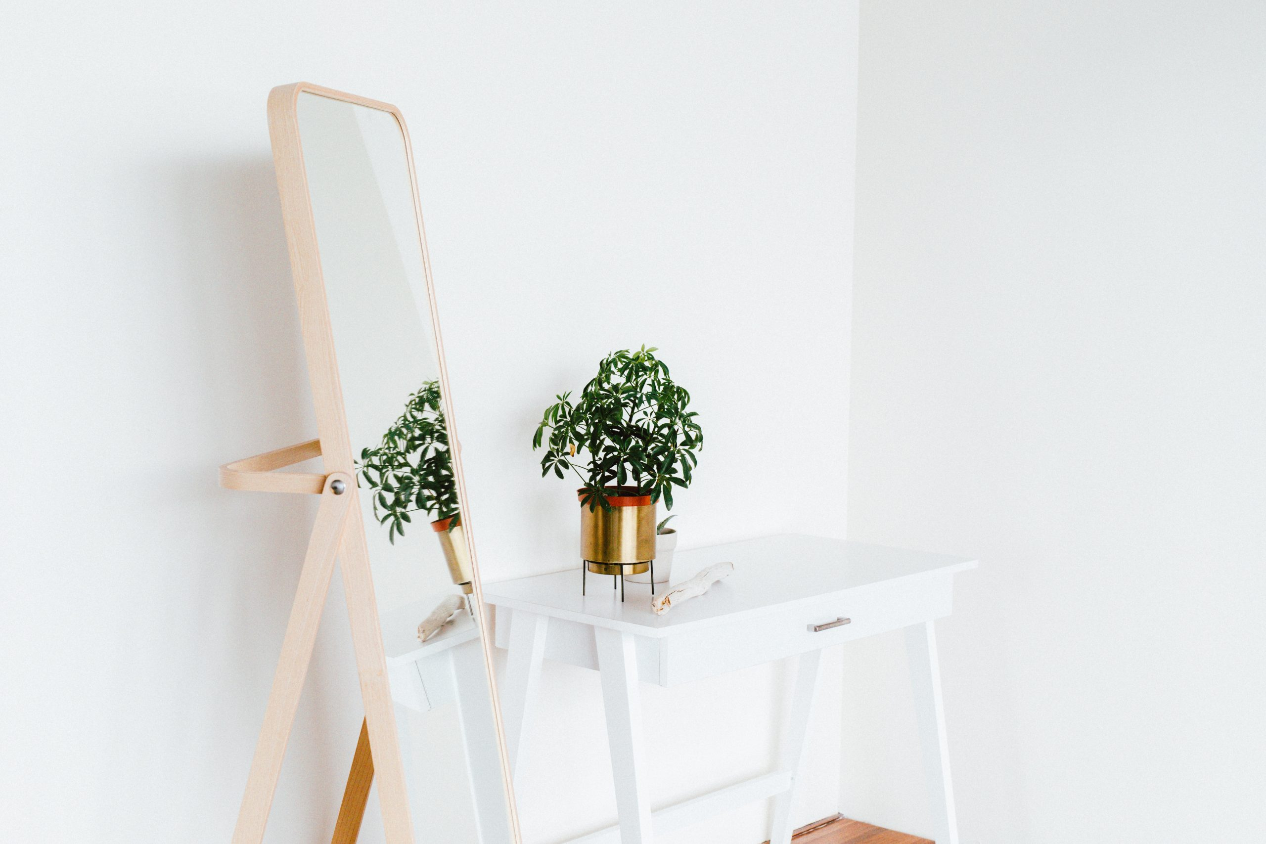 mirror-plant